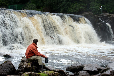River Erriff - Watching seatrout and salmon leaping Assleagh Falls River Erriff Co Galway Ireland