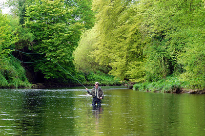 Moyola River - Fly angler on the River Moyola at Castledawson, Co Londonderry, N Ireland