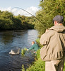 River Bandon -  salmon angler plays fish while guide nets it - Flyfishing for salmon on the River Bandon, Co Cork, Ireland