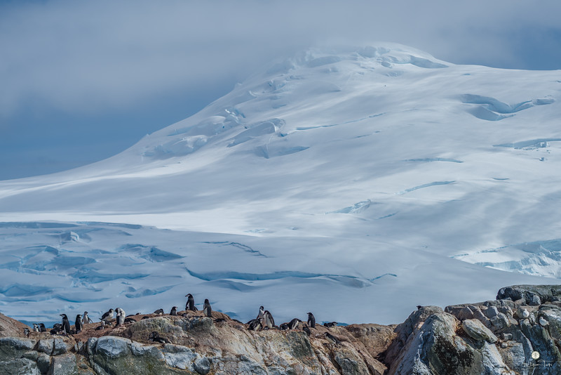 Chinstrap Penguin Colony and Mountain