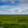 Seljalandsfoss Fields