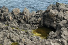Halophytic algae growing in a tide pool upon the volcanic rock - with beyond the water of the Norðfjarðarflói (bay).