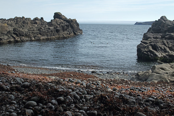 Páskahellir (Easter Cave) - from the smooth water eroded volcanic clasts amongst the seaweed (algae/kelp) - to the Eider sea ducks afloat the Norðfjarðarflói (bay) - and distal the end of the Barðsnes (peninsula).