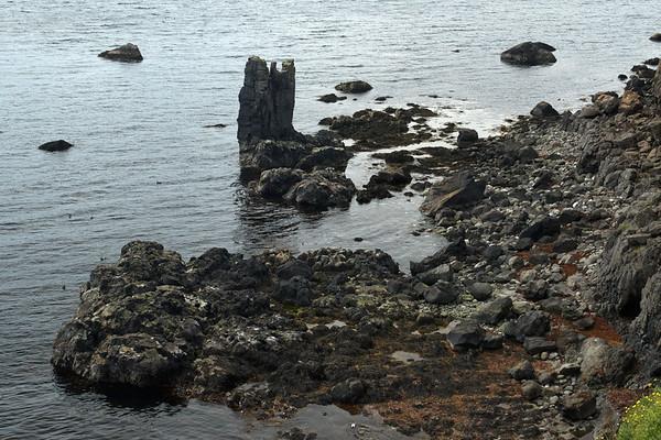 Gípusker (sea stack) - amongst the foraging Eider sea ducks during the beginning of flood tide, along the shoreline below the Tvífjall (mountain) - and upon the Norðfjarðarflói (bay).