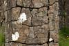 Crustose (paint-like, flat) and Foliose (leafy) lichens and moss thriving upon the jointed columnar basalt rock prism - Dverghamrar (Dwarf Rocks) - Katla Geopark - Southern region of Iceland.