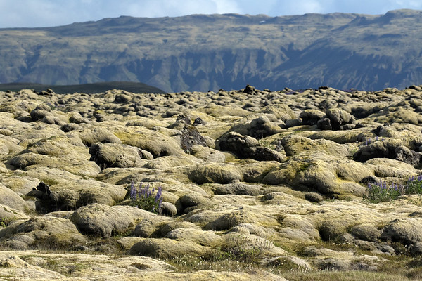 Eldgjárhraun (lava field), part of the Katla volcanic system (1 of 30 in Iceland) - located in the Katla UNESCO Global Geopark - Eastern Volcanic Zone of Iceland - Southern region of Iceland.