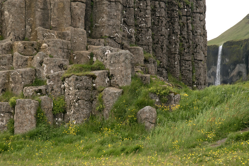 Dverghamrar (Dwarf Rocks) - composed of jointed columnar basalt rock prisms - with lithophytic lichen thriving thereupon, and blooming meadow buttercups, grass, and herb amongst - distal the Siðufoss (falls).