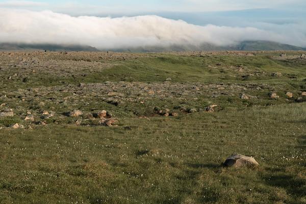 Heath, heather, sedge, moss and grass vegetation across to the cloud bank along the Fjallagarður (Mountain Dike) - Northeastern region of Iceland.