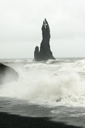 Wave breaking onto the Reynisfjara (beach) - with a gull and the Reynisdrangar (pillars) above.