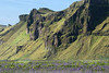Along the eastern craggy slope of the Hjörleifshöfði (headland) - with a patch of nootka lupine below.
