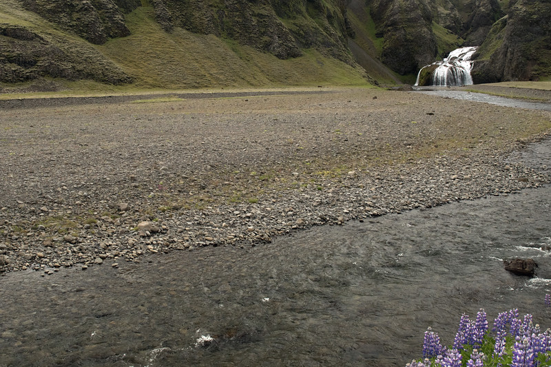 Nootka Lupine - Stjórn (stream) - cascading Stjórnarfoss (falls).