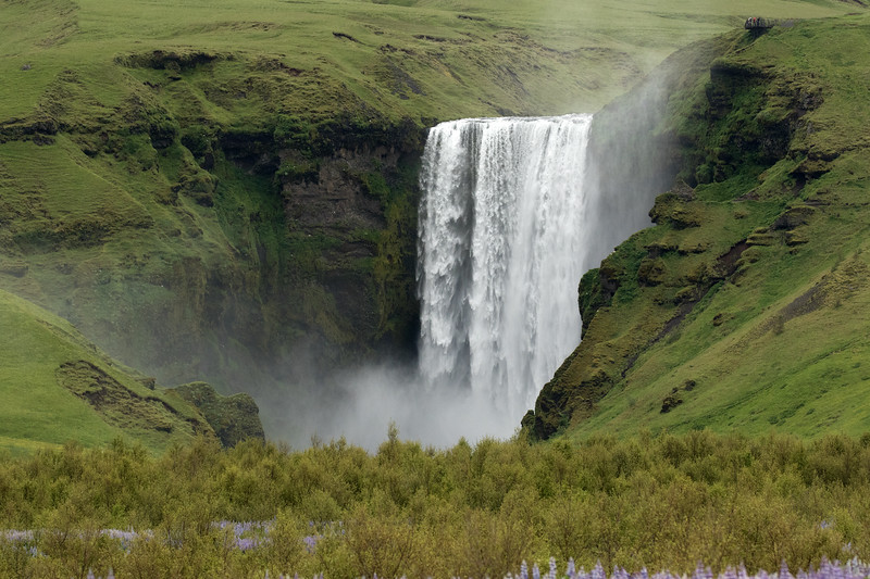 Skógafoss - plunging from the volcanic rock ledge, among the moss, lichen, and grass - with the Birch and Nootka Lupin in the foreground.