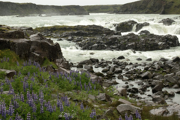 From the Nootka lupine and extrusive igneous rock - to the Urridafoss, sourced by the Thjorsá (river).