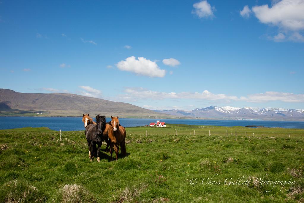Idyllic  Horse Ranch
