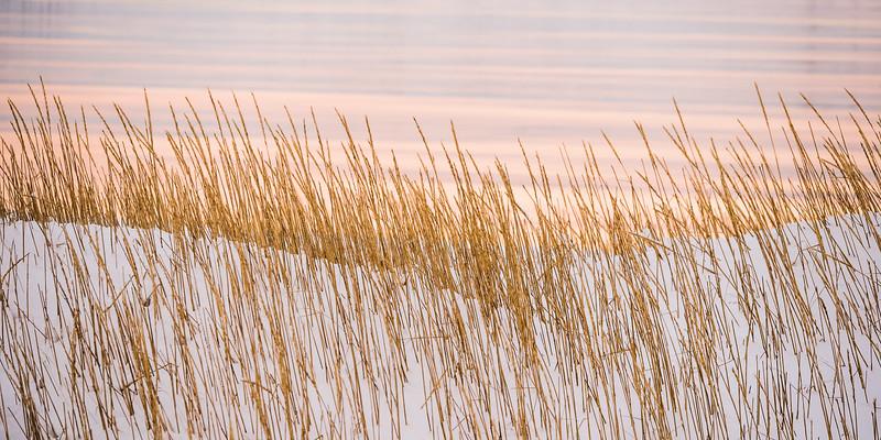 Grasses at Kirkjufell