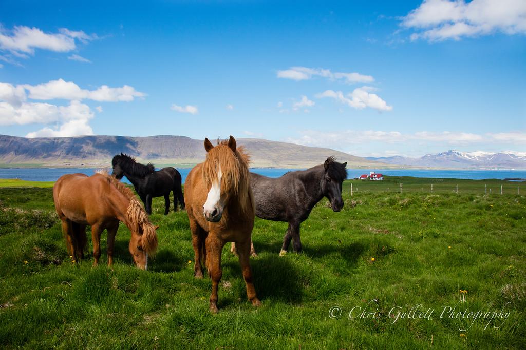 Devil May Care Pony Gang