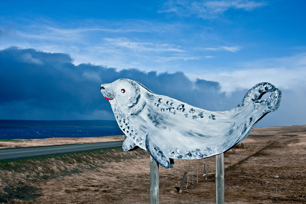 Snæfellsnes Seal