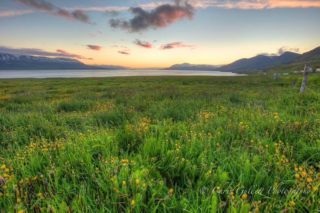 Dandelions Before The Sea, Wait For Sunrise
