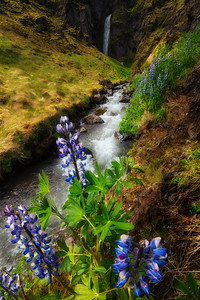 Lupin waterfall