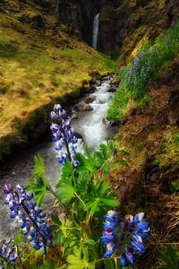 Lupin waterfall