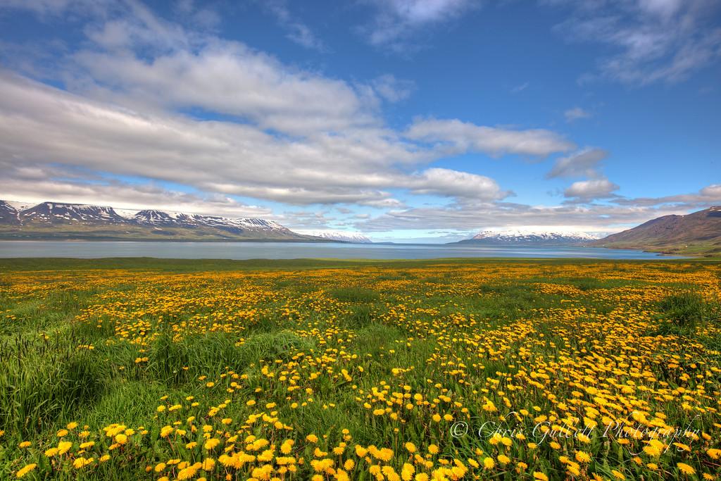 Dandelions Before The Sea
