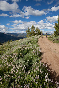 Lupins and mountain bikers on the East Fork of Baker Creek road.