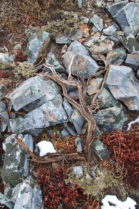 Colorful rocks and sage branch...