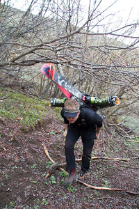 We drove 4 miles up Bullion before the encroaching willows blocked the road.  Greg ducks his ski tips underneath the trees.
