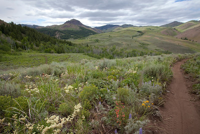 The second wave of flowers are coming out after the Arrowleaf Balsamroot has past.  Sulphurflower Buckwheat, Scarlet Gila, Purple Lupine to name a few.