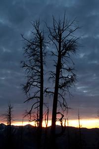 Burned tree silhouette.