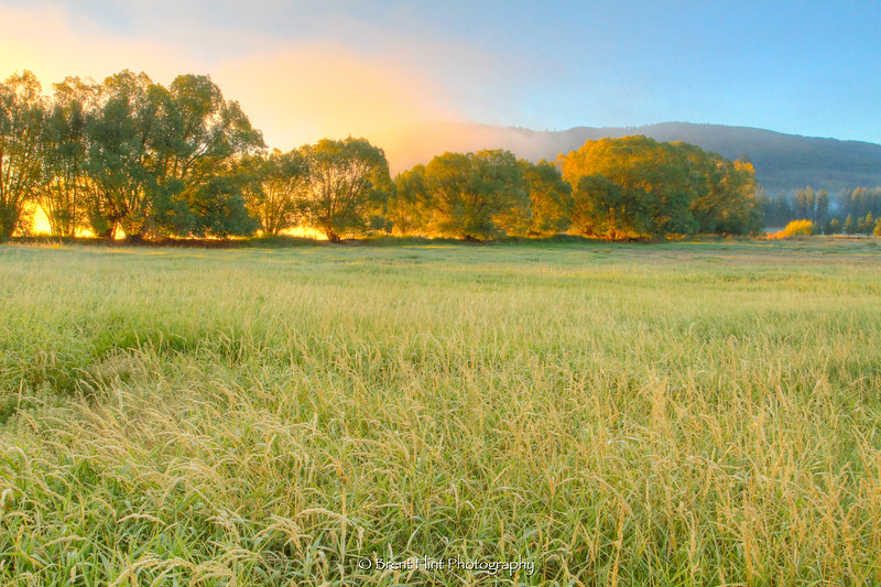 DF.3263 - meadow, trees and fog at sunrise, Blanchard Lake, Bonner County, ID.