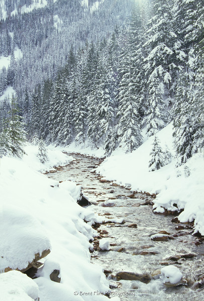 S.3887 - Two Mile Creek, winter, Coeur d'Alene National Forest, ID.