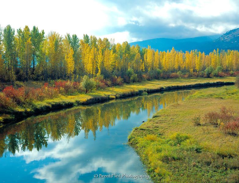 S.4221 - Deep Creek and black cottonwoods, Kootenai National Wildlife Refuge, ID.