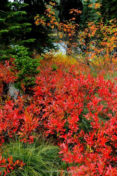 DF.2445 - fall color, Gem Lake, Kaniksu National Forest, ID.