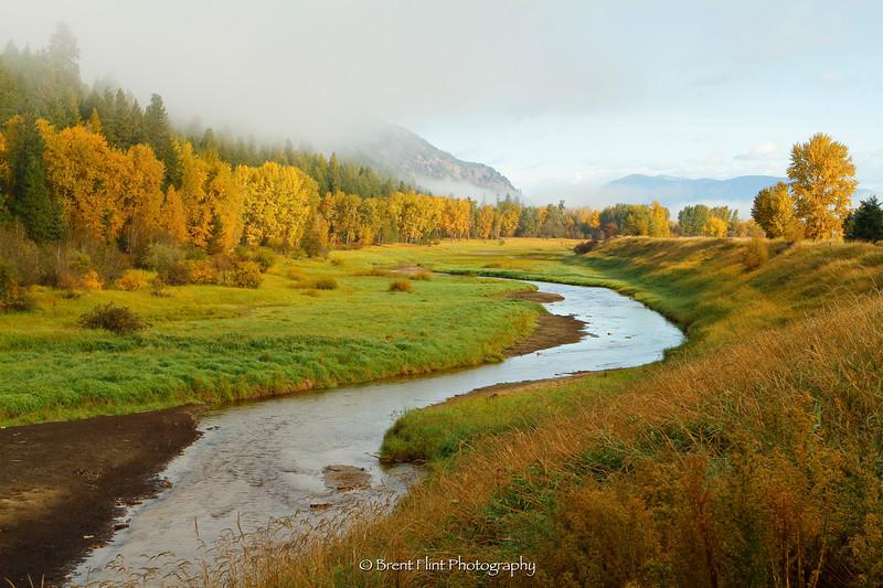 DF.1881 - Myrtle Creek and Autumn cottonwoods, Kootenai National Wildlife Refuge, ID.