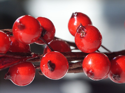 Red Red Berries.