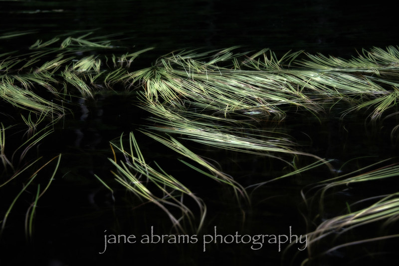 water grass 4