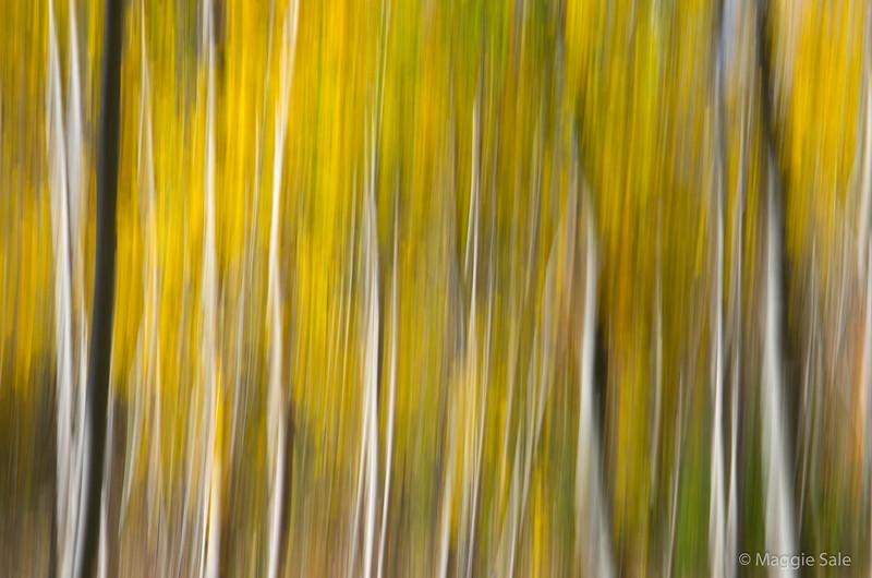 Fall colour, Bruce Trail, Mount Nemo, Ontario
