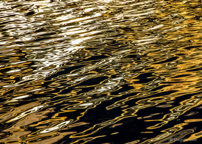 Golden light on Guleph Lake taken from our canoe