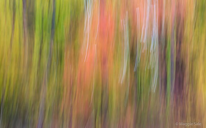 Fall colours in the Niagara Region