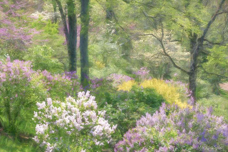 The Lilac Dell at Royal Botanical Gardens.