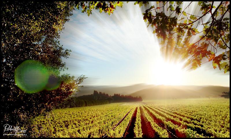 """""""Tachnee's Vines"""""""