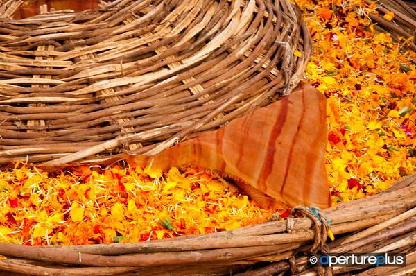 Haridwar Offerings