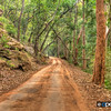 Bandhavgarh Road