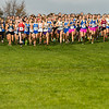The start of the the IHSAA Girls Cross Country Carmel Semi-State at Northview Christian Church in Carmel, Indiana on Saturday, October 20, 2012.  Carmel won with Hamilton Southeastern taking second and Franklin Central third.  Kirk Taylor/For the Star