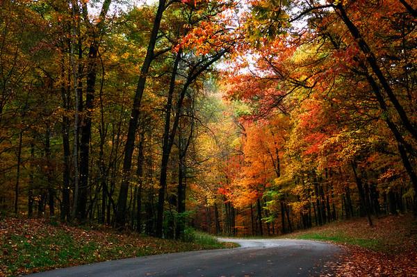 Autumn Drive through Trees
