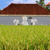Urban Ricefields in Canggu, Bali (2)