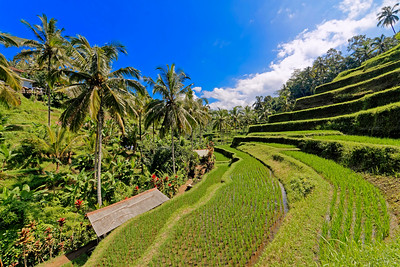 Tegalalang Rice Terrace, Bali, Indonesia (1)