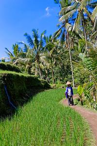 Tegalalang Rice Terrace, Bali, Indonesia (5)