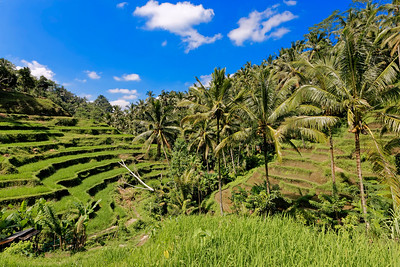 Tegalalang Rice Terrace, Bali, Indonesia (2)